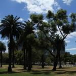 Melbourne: Palmen spenden Schatten im Park