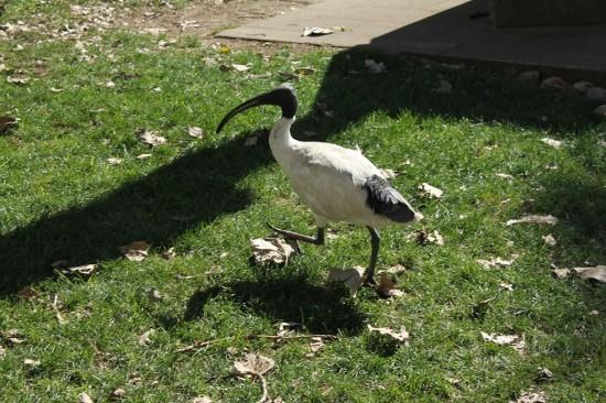 Sydney Camp 31 - Komischer Vogel - IMG_1176