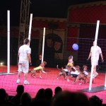 Australien - Silvers Circus 04 - Footy mit Hunden - IMG_2168
