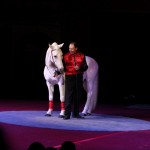 Australien - Silvers Circus 09 - Pferdeflüsterer - IMG_2222