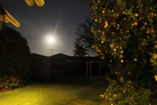Australische Nacht - Zitronenbaum im Mondlicht - IMG_2588