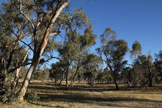 Alice Springs - Typische Landschaft - IMG_4169