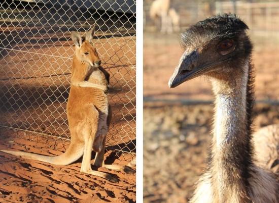 Outback - Känguru und Emu im Roadhouse-Zoo