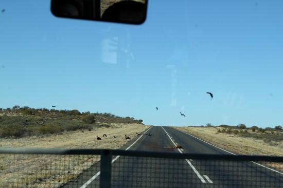 Outback - Roadkill auf dem Stuart Highway - IMG_4310