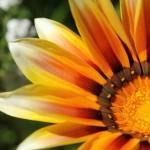 WA Blumen 01 - Orange - IMG_6324