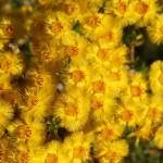 WA Blumen 08 - Gelb - IMG_6335