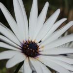 WA Blumen 10 - weiss - IMG_6442