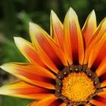 WA Blumen 16 - orange - IMG_6475