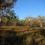 Das ist der frühmorgendliche Busch in der Wetlands Region des Top End, nicht weit von Darwin.